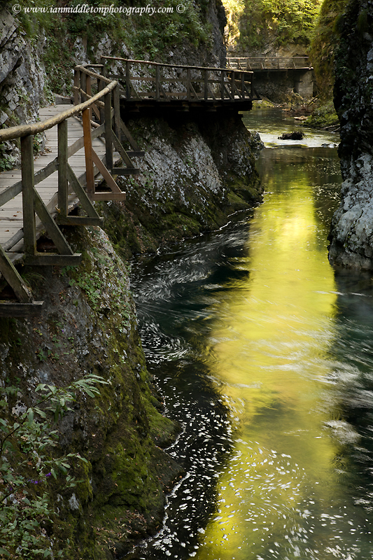 The Soteska Vintgar gorge, Gorje, near Bled, Slovenia. . The 1.6 km long Vintgar gorge carves its way through the vertical rocks of the Hom and Bort hills by the Radovna River.