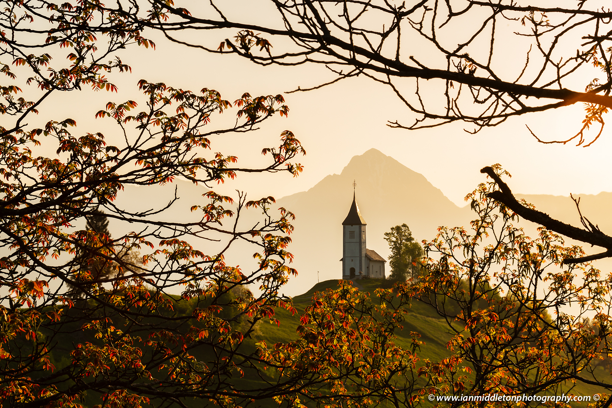 Sunrise at Jamnik church of Saints Primus and Felician, perched on a hill on the Jelovica Plateau with the kamnik alps and Storzic mountain in the background, Slovenia. Framed by some trees in Spring Bloom.